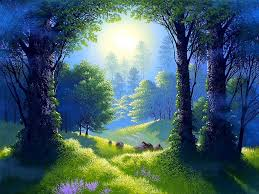 forests beautiful place colorful peaceful nature trees forest