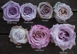 lavender roses the lavender purple study flirty fleurs the florist