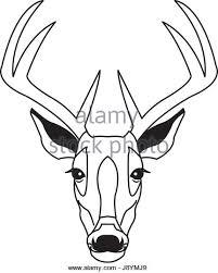 deer drawn stock photos u0026 deer drawn stock images alamy
