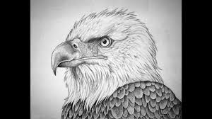 how to draw bald eagle head pencil drawing step by step youtube