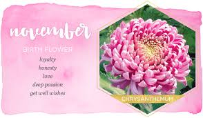 flowers in november november birth flower chrysanthemum ftd com