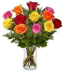 color roses 12 mixed color roses bursting with beauty pugh s flowers local