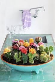 Cactus Garden Ideas S Day Diy Gift Ideas 10 Inspiring Succulent Cactus
