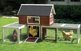 does my neighborhood allow a backyard chicken coop advantek