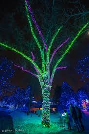 Zoo Lights Pictures by Denver Zoo Lights Photos