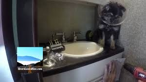 Animal Toilet Paper Holder by Installing A Toilet Paper Holder In An Rv Youtube