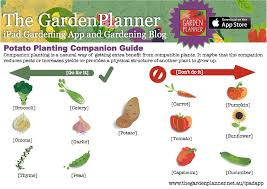 Companion Planting Garden Layout Temperate Potatocompanionguide The Garden Planner Pinterest