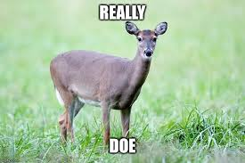 Doe Memes - really doe imgflip