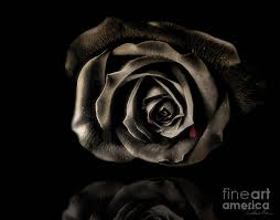 black roses for sale black photograph by danuta