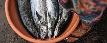 pesci alimentazione alimentazione diossina inquinamento e specie sfruttate ecco