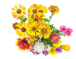 isolated on white bright colorful bouquet of garden and wild