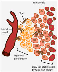 ijms free full text targeting mitochondrial function to treat