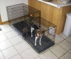 crate training indoor dog toilet 3 steps