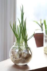 10 Vegetables U0026 Herbs You by 10 Vegetables You Can Grow In Containers Grow Green Onions And