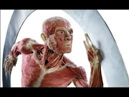 The Human Anatomy Muscles 111 Best Body Images On Pinterest Human Anatomy Health And