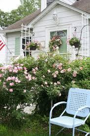 69 best gardening ideas images on pinterest plants gardening