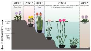 how to grow pond plants unwins