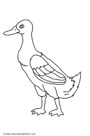 drawing duck