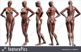 Images Female Anatomy Science Female Anatomy Body Stock Illustration I2909178 At