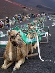 2011 jameos del agua lanzarote girls holiday karaoke camels
