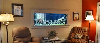outstanding wall mounted fish aquarium about pet life