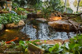 Aquascape Inc Water Gardening Store And Inspiration Center Pond Construction