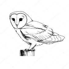 hand drawn owl sketch u2014 stock vector radhanamini 68292323