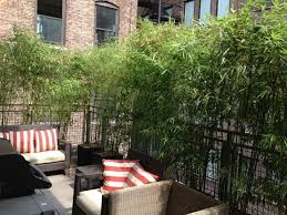 Privacy Garden Ideas How To Improve Privacy Of Rooftop Garden Rooftop Garden Ideas