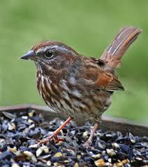 Backyard Song Birdfellow Birding Services Social Networking And Habitat