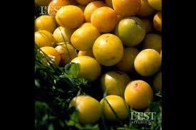 chambre d agriculture du doubs chambre d agriculture doubs 20 images une prairie jaune dans