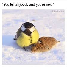 Funny Bird Memes - 10 fresh memes today 8 if 2017 was a person loldamn com