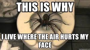 Spider Meme - this is why i live where the air hurts my face big spider meme