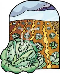 cabbage patch clipart 19