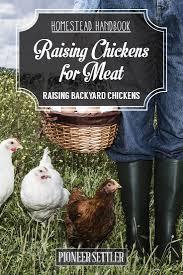 raising chickens for meat homestead handbook
