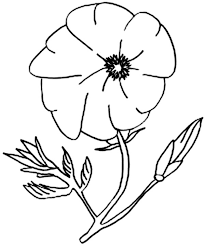 california poppy love colouring colouring tube