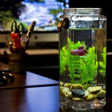Asian Themed Fish Tank Decorations 30 Best Fish Tanks Images On Pinterest Aquarium Ideas Fish