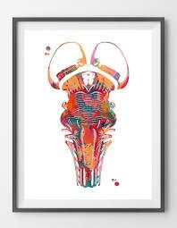 Brain Stem Anatomy Brain Stem Watercolor Print Medical Art By Mimiprints U2013 Mimiprints