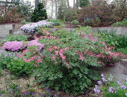 Bleeding Hearts Flowers Bleeding Heart Whole Life Gardening