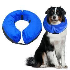 Comfortable Dog Collar Best 25 Inflatable Dog Collar Ideas On Pinterest Plastic