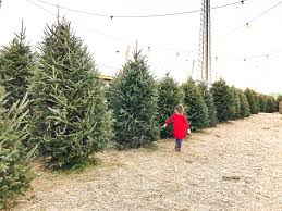 real christmas tree ultimate guide to decorating and caring for a real christmas tree
