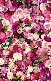 kate spade roses u2022 inspire u2022 pinterest rose wallpaper