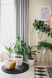 home interior plants 11 cool house plants trending in 2016 brit co