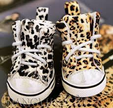 shoes for dogs on hardwood floors wood floors