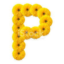flowers that start with letter p best flower in the word 2017
