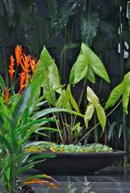Tropical Rainforest Plant Species List - tropical rainforest animals and plants tropical rainforest
