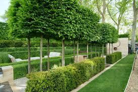 hedges todd haiman landscape design