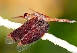 seak7 dragonfly butterfly park kuala lumpur malaysia