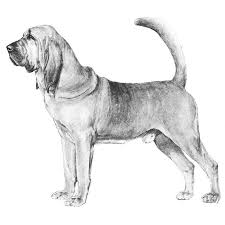 belgian shepherd weight chart embark dog dna test breed