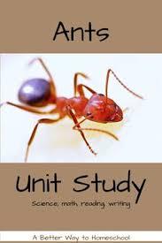 u0027s grade class ants