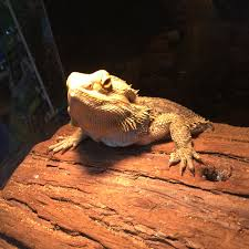 Ringed Map Turtle Reptile Amphibian And Exotic Pet Care And Information That
